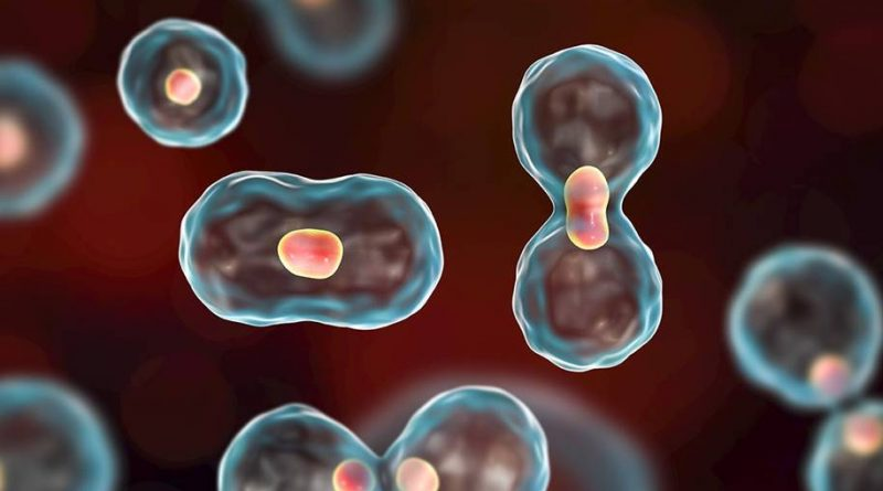 Células-tronco cancerígenas