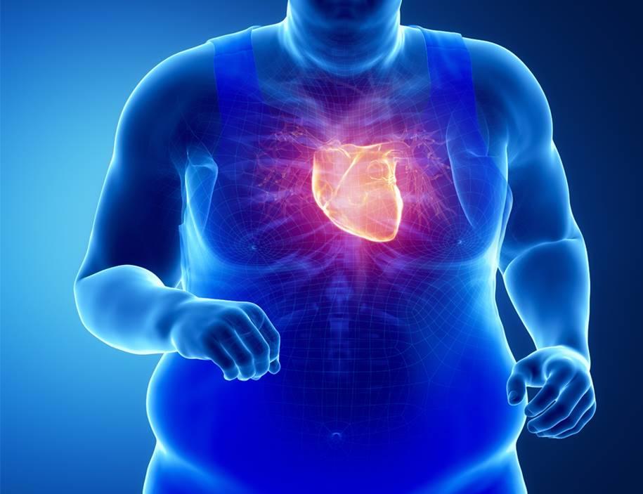 Coração e a Gordura no corpo