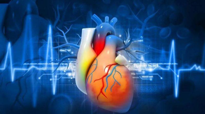 Gordura no corpo e o coração