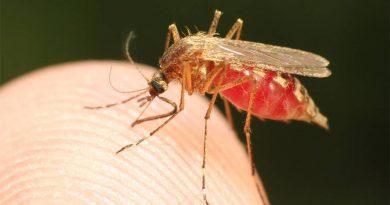 Bloquear a transmissão da malária