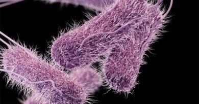 Salmonella resistente a antibióticos