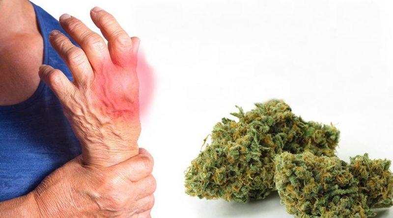 Cannabis pode ser eficaz para alívio da dor e insônia