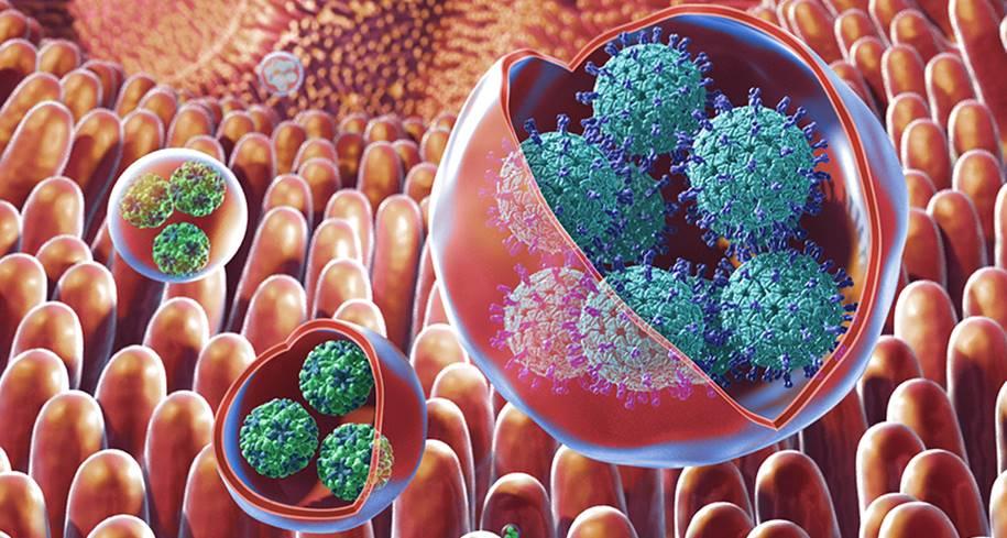 Dor de estômago pode ser uma infecção viral