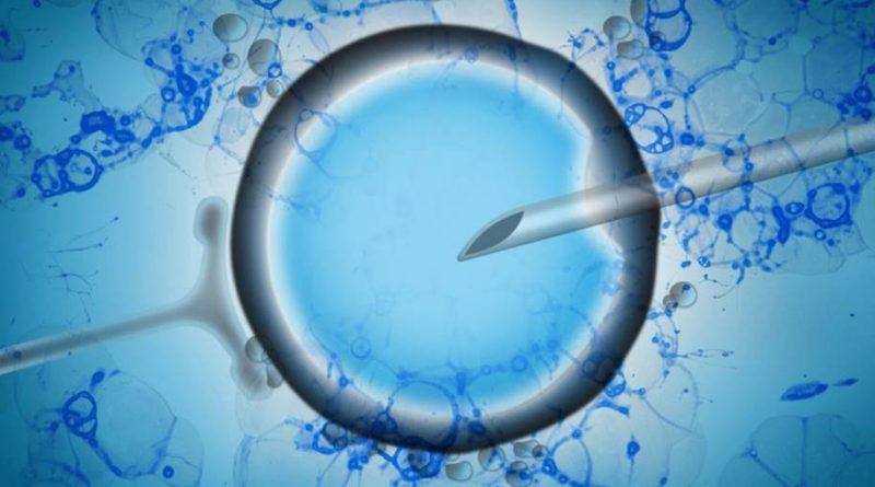 Sequenciamento unicelular revela mais sobre o embrião humano