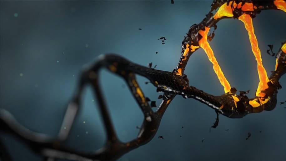 Alterações no DNA aceleram o processo de envelhecimento