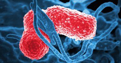 Bactérias da Pneumonia usam peróxido de hidrogênio como arma