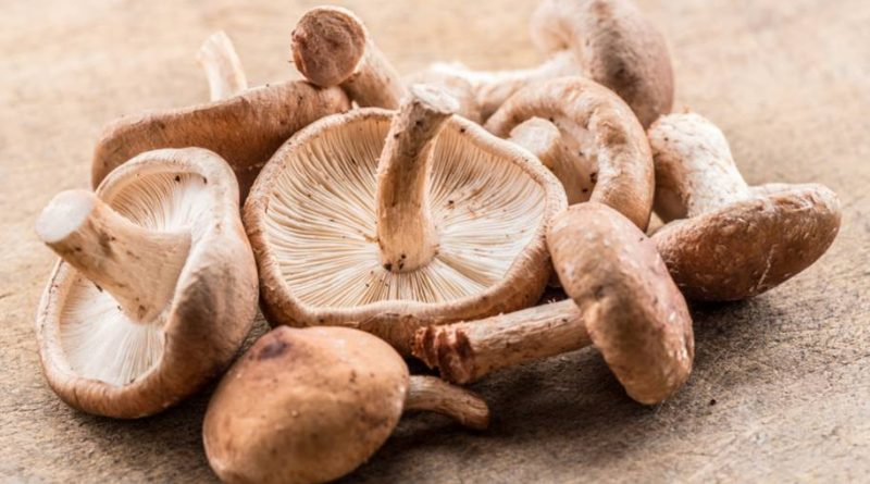 Cogumelos pode ajudar a diminuir o risco de câncer de próstata