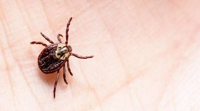 Dispositivo é capaz de diagnosticar a doença de Lyme em 15 minutos