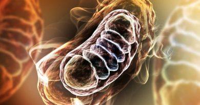 Mitocôndrias - falha no controle da qualidade causa doença cardíaca