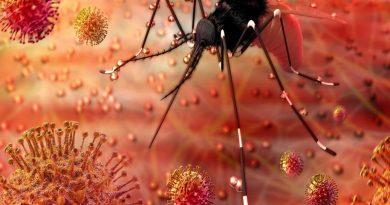Uma droga utilizada contra o HIV interrompe a infecção pelo Zika vírus