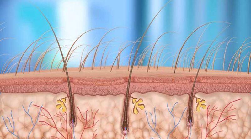 Alguns tipos de câncer de pele podem começar nos folículos capilares