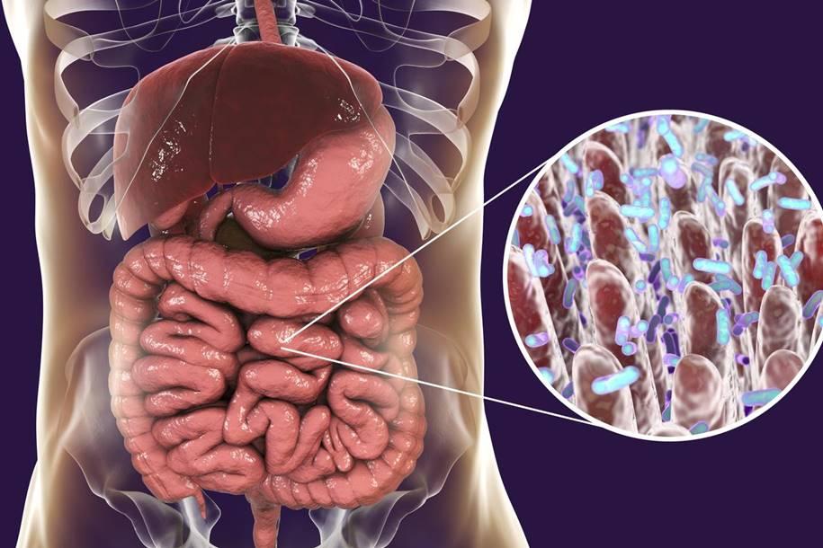 Bactérias no intestino podem alterar todo o processo de envelhecimento