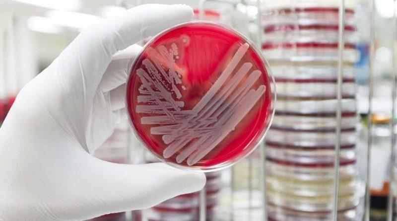 Medicamentos inteligentes para tratar infecções por estafilococos