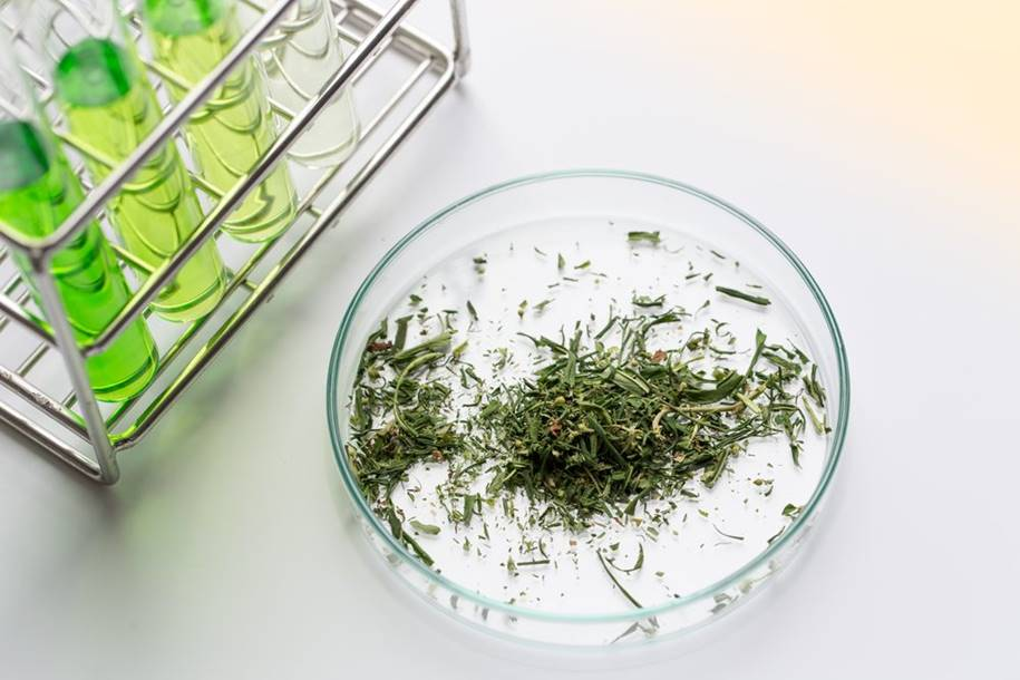 O uso da cannabis em pacientes com Parkinson