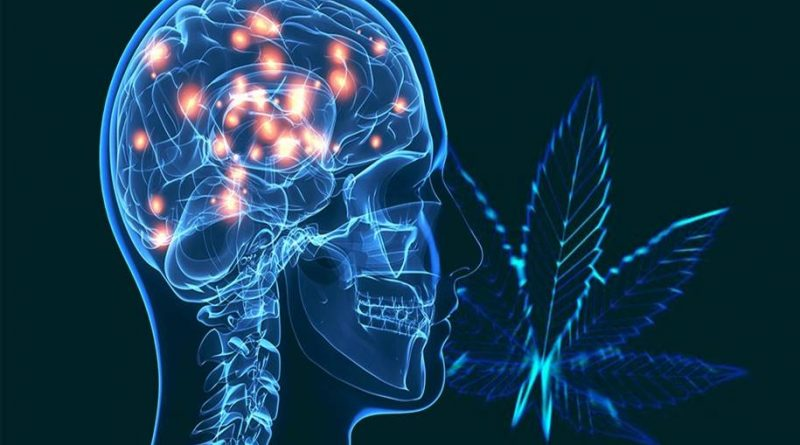 Um potencial substituto da cannabis no tratamento de Parkinson