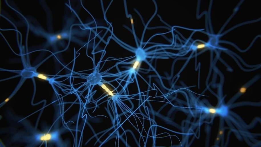 Falta de proteína no cérebro causa comportamentos como o autismo