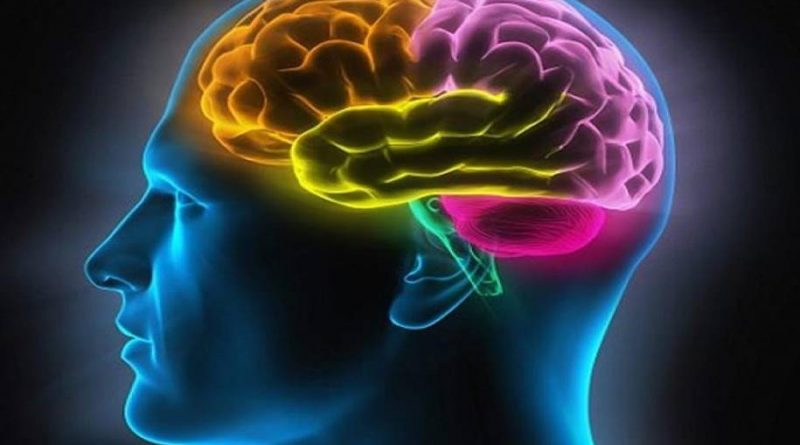 Falta de proteína no cérebro causa comportamentos semelhantes ao autismo