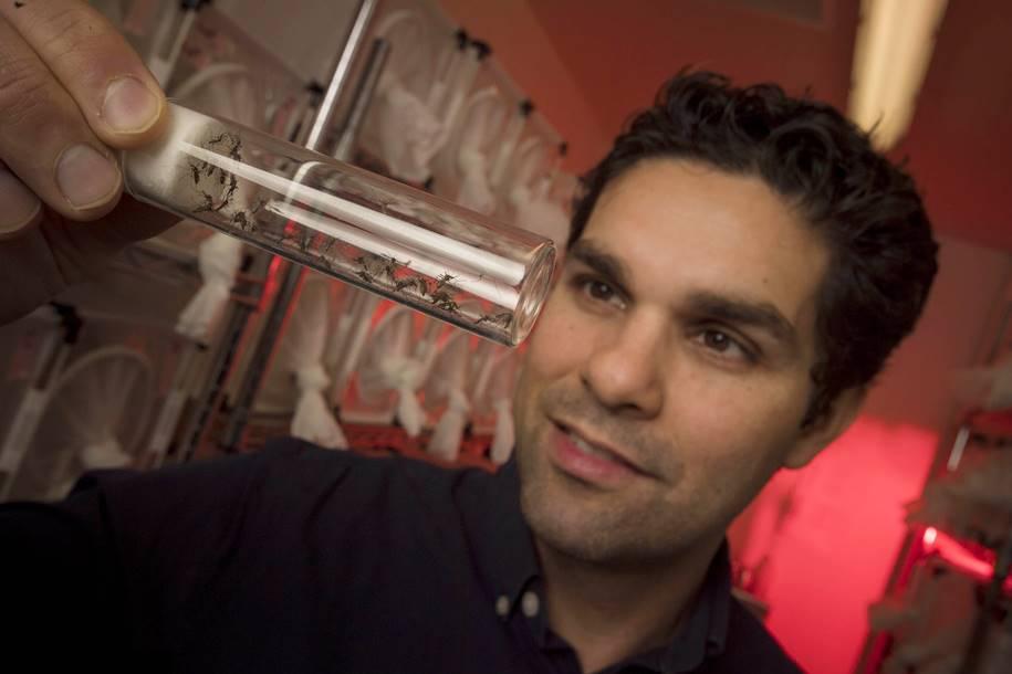 Vírus da Dengue - Dr Omar S Akbari - Pesquisador da Universidade de San Diego