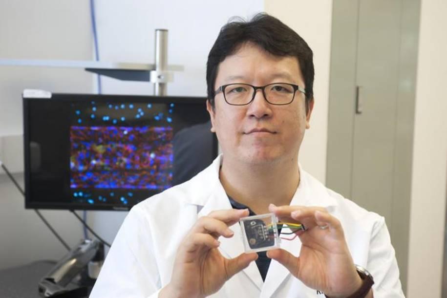Chip cria barreira hematoencefálica para combater doenças neurológicas