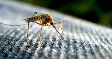 Descoberta abre caminho importante no tratamento contra malária