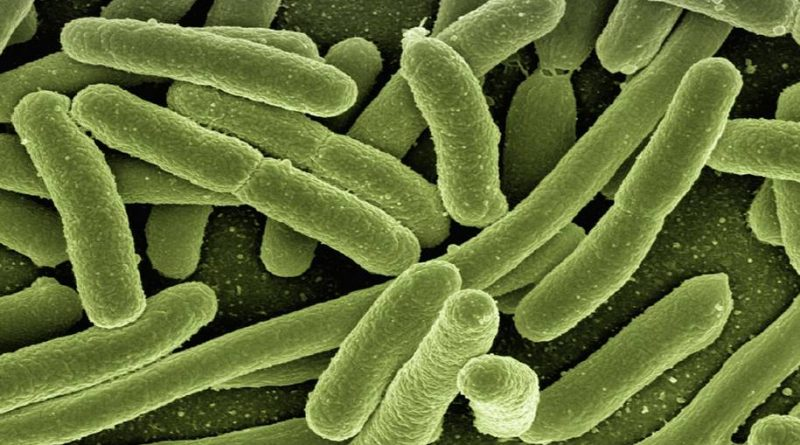 Pesquisadores criaram o 1º atlas detalhado do microbioma intestinal