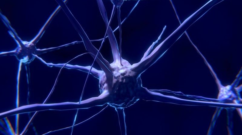 Glioblastomas 3D para encontrar tumores cerebrais malignos