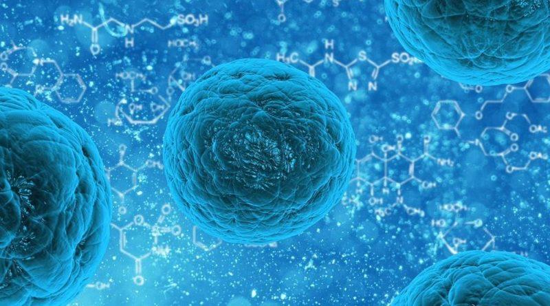 Células de gordura abdominais ajudarão no tratamento de Sepse
