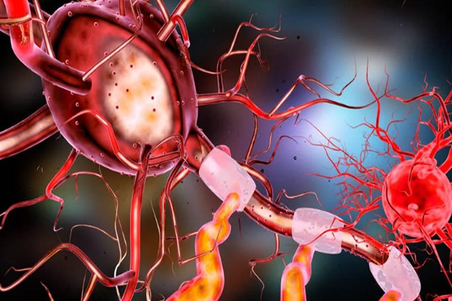 Imagem óptica vai ajudar a tratar câncer e doenças cerebrais