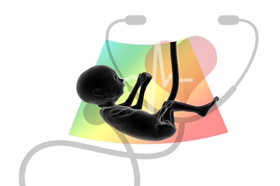 Estudo fornece idéias sobre a importância da placenta