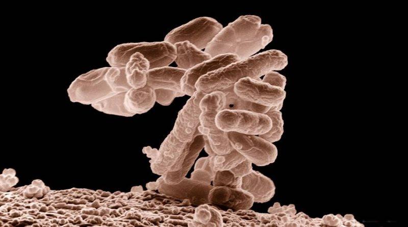 Stenotrophomonas maltophilia - patógeno preocupa cientistas