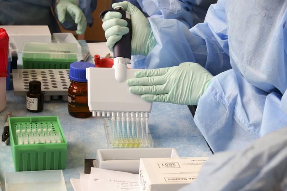 Anticorpos retirados de lhamas podem neutralizar o coronavírus