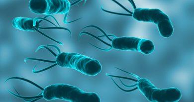 Terapia probiótica para pacientes infectados por Helicobacter pylori